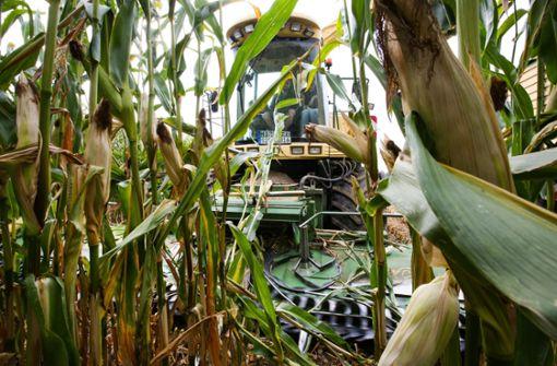 Bauern bekommen Millionen-Nothilfe