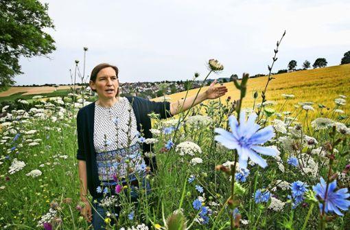 Ein Blütenparadies für Hummeln und Co