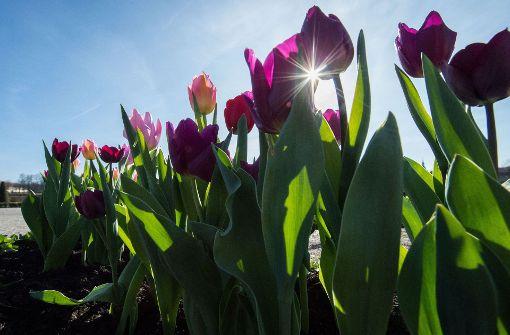 Zum Beginn des langen Wochenendes zeigt sich endlich wieder die Sonne.  Foto: dpa