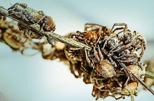 Spinnen haben Sinn für Familie