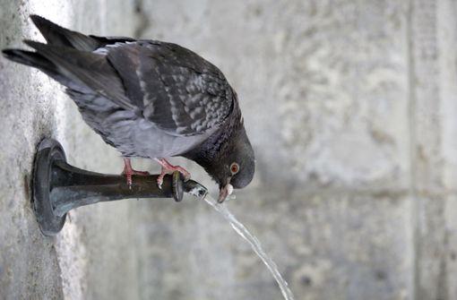 Bezirksbeirat will einen Trinkbrunnen im Ortszentrum