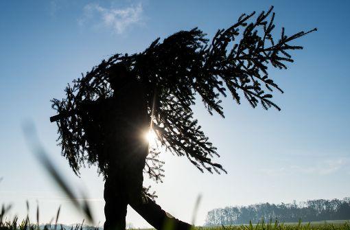 Betrunkener stiehlt Weihnachtsbaum