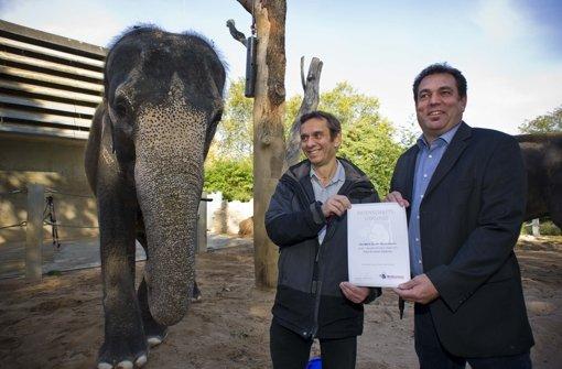 Patenschaft für Elefantendamen