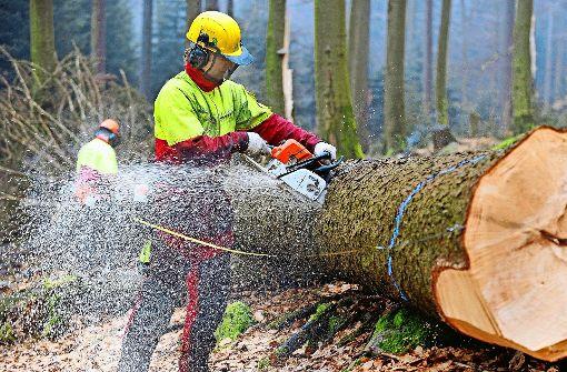Spaziergänger empört über Baumfällungen