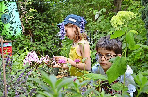 Steinmeier eröffnet Internationale Gartenausstellung