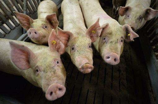 Schilder warnen vor Schweinepest