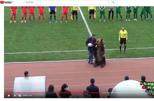 Braunbär für Showeinlage vor Fußballspiel missbraucht