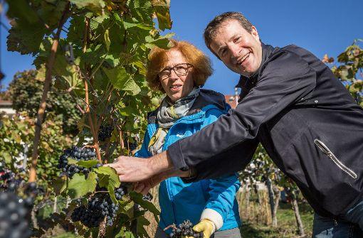 Silvia Fischer und Martin Körner beim Traubenschneiden Foto: Lichtgut/Julian Rettig