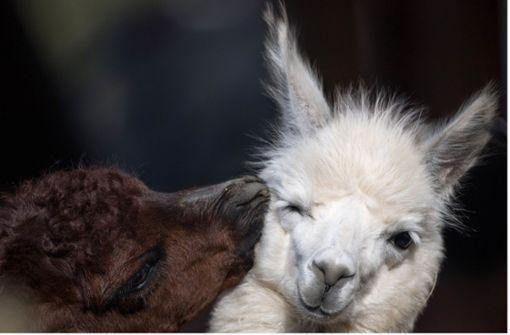 Das sind die süßesten Tiere mit eigener Instagram-Seite