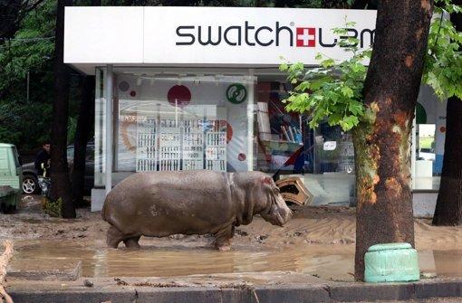 Wilde Tiere streunen durch die Straßen