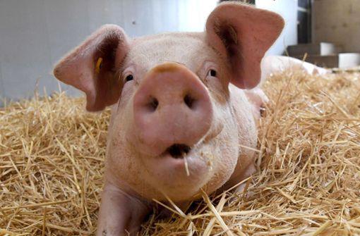 Bislang hatten viele Handesketten eigene Kennzeichnungen, ab April soll es ein einheitliches System geben, meldete die Initiative Tierwohl. (Symbolfoto) Foto: dpa