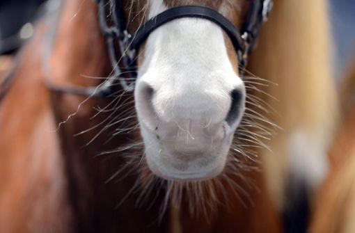 Feuerwehr rettet Pferd aus Bachlauf