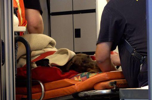 Eine Dobermann-Hündin wurde bei einem schweren Auffahrunfall auf der A8 verletzt. Foto: 7aktuell.de/Alexander Hald