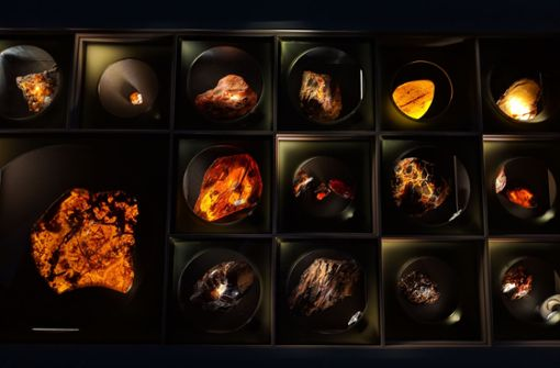Packende Dramen aus der Urzeit – eingeschlossen in Bernstein