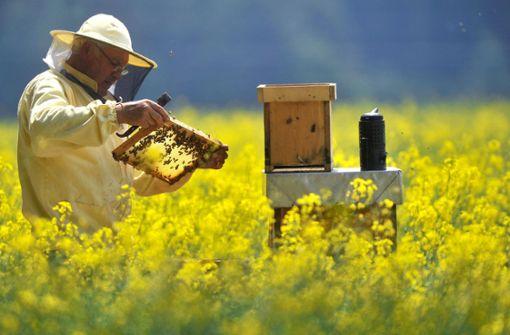 Im Spätsommer behandeln Imker ihrer Bienenvölker mit 60-prozentiger Ameisensäure, um die Varroa-Milben abzutöten. Foto: dpa