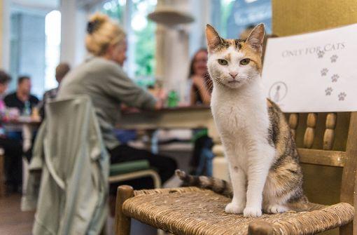 In Hamburg eröffnet das erste Katzencafé