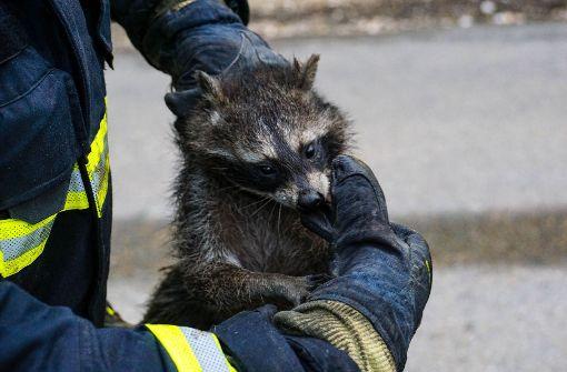 Göppinger Feuerwehr als tierfreundlich ausgezeichnet