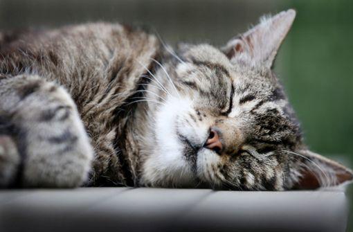 Spaziergängerin entdeckt sieben tote Katzen auf Feldweg