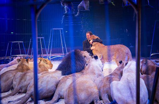 Martin Lacey mit seinen Raubkatzen. Foto: Lichtgut/Max Kovalenko