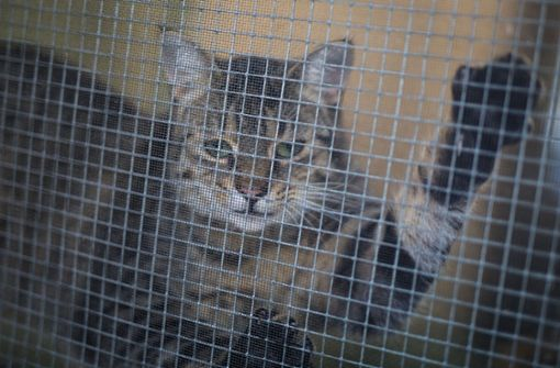 Eine Katze blickt im Tierheim Böblingen aus einem Fenster mit Gitter davor. Foto: dpa