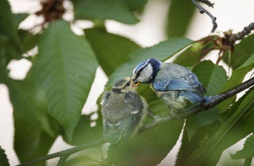 So wird Ihr Garten zum Vogelparadies