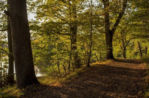 Laubbedeckte Waldwege rund um die Seen in Stuttgart läuten den bevorstehenden Herbst von seiner schönsten Seite ein. Foto: 7aktuell.de/Oskar Eyb