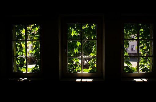 Grün vor Nachbars neugieriger Nase
