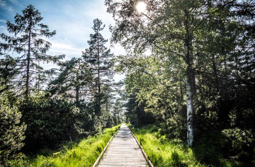 Der Nördliche Schwarzwald: Wandergenuss trifft E-Mobilität