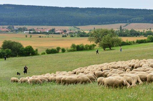 Feuerwehr eilt einem Schaf zu Hilfe