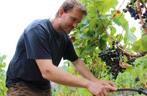 Knochentrockene Böden und frühreife Früchte
