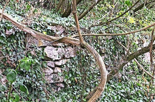 Wie kamen die Mauern in den Wald?