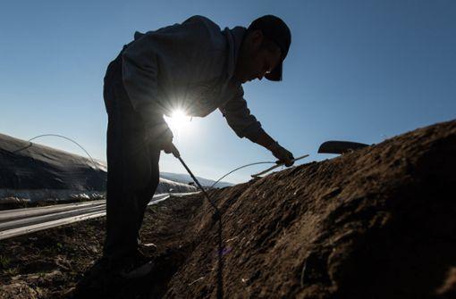 Im Südwesten werden die Erntehelfer aus Osteuropa knapp