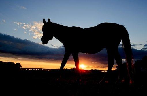 Pferd die Zunge abgeschnitten