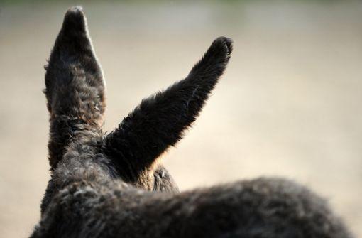 Ein ungleiches Paar: Esel und Emu sind unzertrennlich