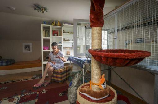 Seit 27 Jahren kümmert sie sich ehrenamtlich um das Wohl der Katzen rund um Bietigheim. Foto: factum/Granville