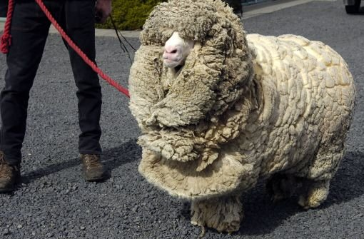 bTipp 2: Die richtigen Materialien/bbr Wolle, Seide und Fell halten den Körper warm und die Kälte fern. Nasse Kleidung sollten Sie unbedingt ausziehen. Andernfalls kühlt der Körper in Nullkommanichts aus. Foto: dpa