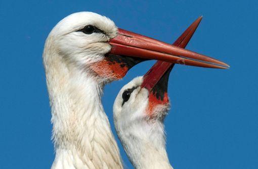 Storchen-Schilder in Herzform gestohlen