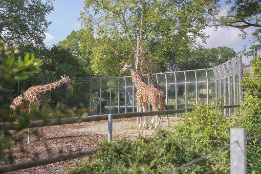 Wie die Tiere in den Zoo kommen