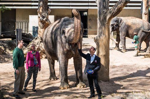 Zoo will Elefanten und Tiger züchten