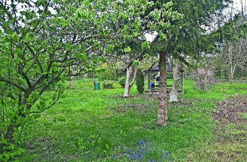 Das 1700 Quadratmeter große Grundstück wartet auf fleißige Gärtner. Foto: Sven Singler
