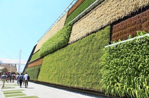 Vertikale Felder:  Der US-amerikanische Pavillon zeigt, wie effiziente Bepflanzung aussehen kann. Foto: Melanie Maier