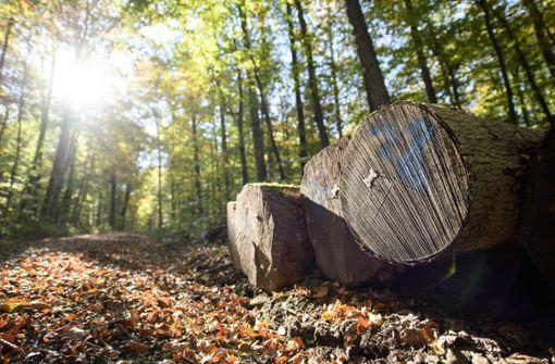 Meist gibt es gute Noten für den Wald im Südwesten