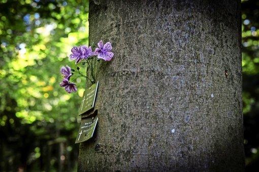 Baumgräber auf dem Waldfriedhof, geschmückt mit Blumen Foto: Lichtgut/ Zweygarth