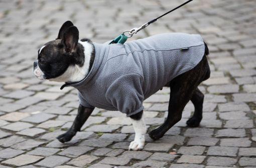 Die Designer-Outfits sind etwas ausgefallener als dieser Hunde-Fleece (Symbolbild). Foto: dpa
