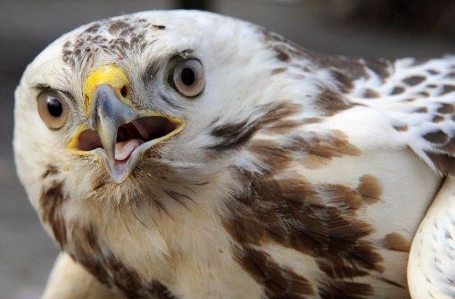 Jagdhilfen für Greifvögel entfernt