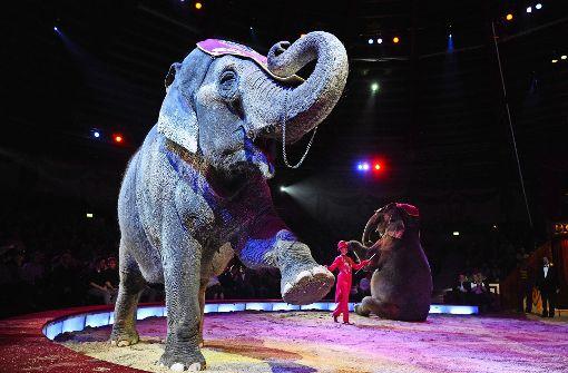 Der Circus Krone schließt eine Klage gegen das Stuttgarter Wildtierverbot  nicht aus. Foto: dpa