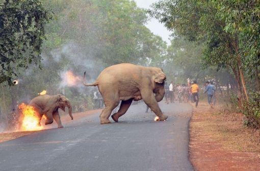 Bild von brennendem Baby-Elefanten wird ausgezeichnet