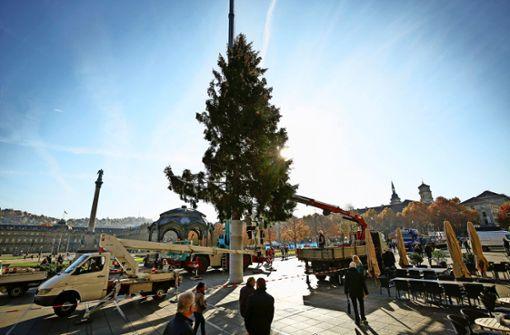 Endlich steht  der Weihnachtsbaum