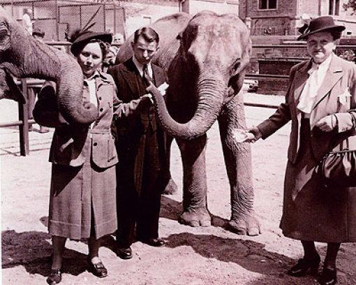 Im Alter von drei Jahren kam Vilja im Jahr 1952 an den Neckar. 12.000 Mark hat die Wilhelma damals in die Elefantenkuh investiert. Das Bild aus dem Jahr b1953/b zeigt Viljas Taufe. Die Patenschaft übernahmen die Damen Bücheler, Verwandte des ehemaligen Direktors des früheren Tierparks Doggenburg (1907 bis ca. 1937) und der Tierpfleger Gfrörer.  Foto: Wilhelma