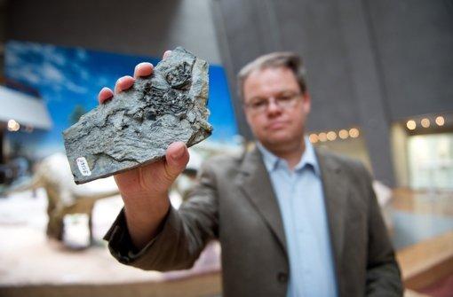Paläontologe Rainer Schoch mit einem Rest versteinerter Schildkröte Foto: dpa